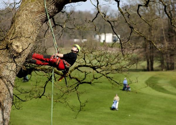 Wij zijn per direct op zoek naar een boomverzorger