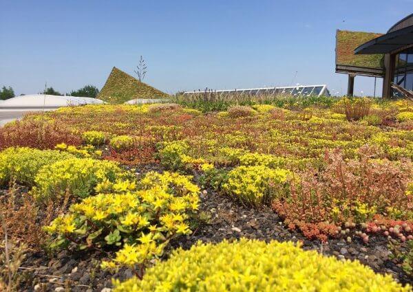 Zomerse drukte op onze biodiversiteitsdaken - De Koninklijke Ginkel Groep