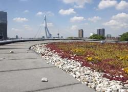 Natuur in de stad