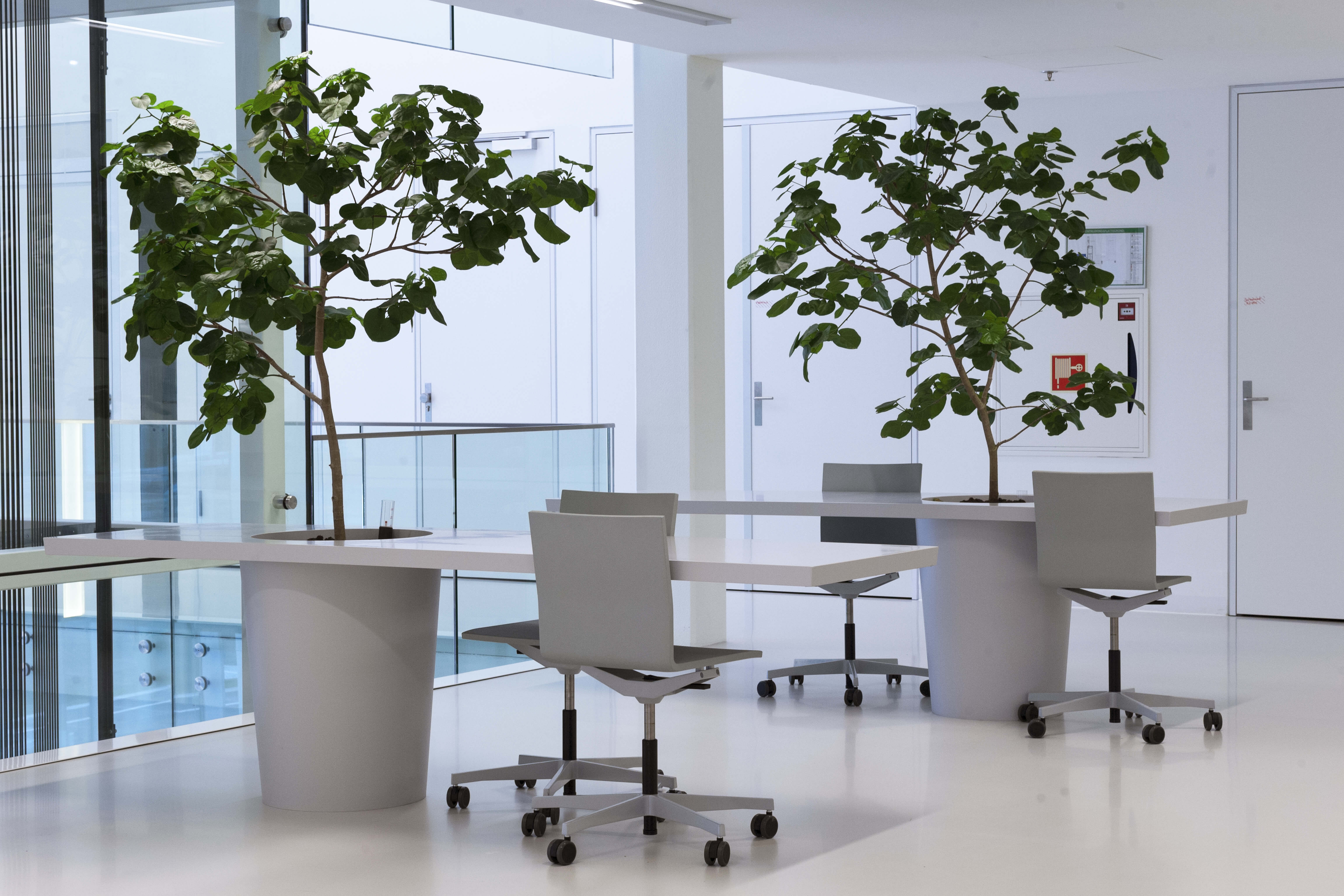 Project interieurbeplanting koninklijke ginkel groep for Interieur beplanting