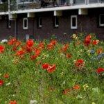 Gemeente Soest Biodiversiteit