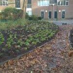 Stadspark in Delft - De Koninklijke Ginkel Groep